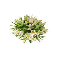 Lilies flowers delivery - Flowers Auckland