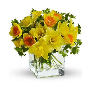 Daffodil Dreams for Spring colour delivered Auckland wide at Flowers Auckland flowers delivery - Flowers Auckland