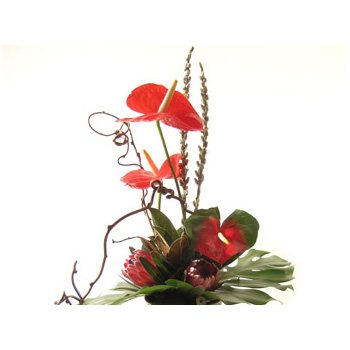 Flowers Auckland Contemporary Flowers Arrangement for Auckland flowers delivery flowers delivery - Flowers Auckland