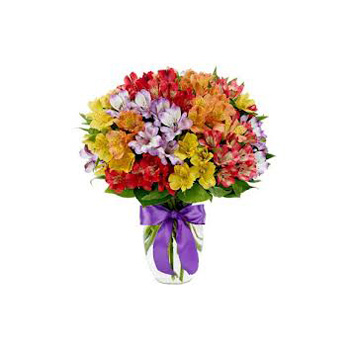 Alstroemeria Array long lasting Flowers Bouquet for delivery Auckland wide flowers delivery - Flowers Auckland