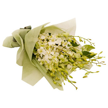 Imported Singapore Orchids for Auckland flower delivery flowers delivery - Flowers Auckland