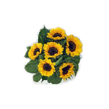 Sunflowers at Flowers Auckland delivered Auckland wide flowers delivery - Flowers Auckland