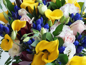 Cuddly 'n blue flowers delivery - Flowers Auckland