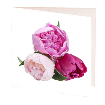 Peony Gift Cards at Flowers Auckland flowers delivery - Flowers Auckland