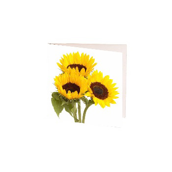 Sunflower Gift Cards to send Auckland wide flowers delivery - Flowers Auckland