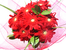 Valentines Red Gerberas from East Tamaki Florist Flowers Auckland flowers delivery - Flowers Auckland