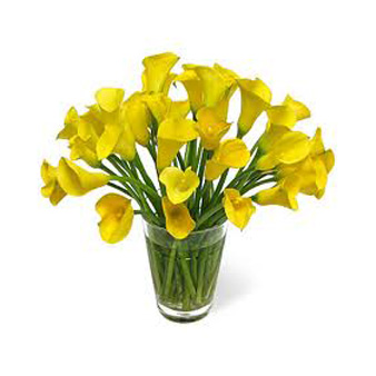 Flowers Auckland Calla Colour bright Lilies flowers delivery flowers delivery - Flowers Auckland