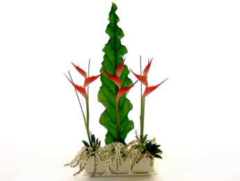 Heliconia Hit a distinctive modern arrangement from Flowers Auckland Florist flowers delivery - Flowers Auckland