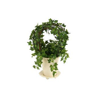 Ivy Topiary Hoop from Flowers Auckland at East Tamaki flowers delivery - Flowers Auckland