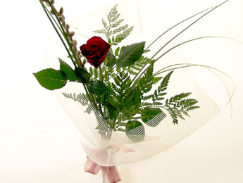 Valentines Single Rose for delivery Auckland wide flowers delivery - Flowers Auckland