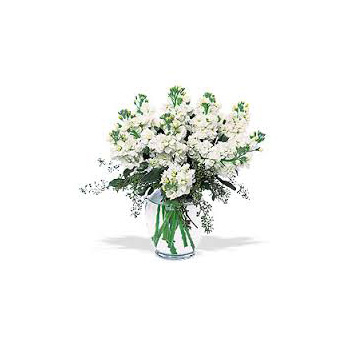 Popular White Stock delivered Auckland wide with Flowers Auckland flowers delivery - Flowers Auckland